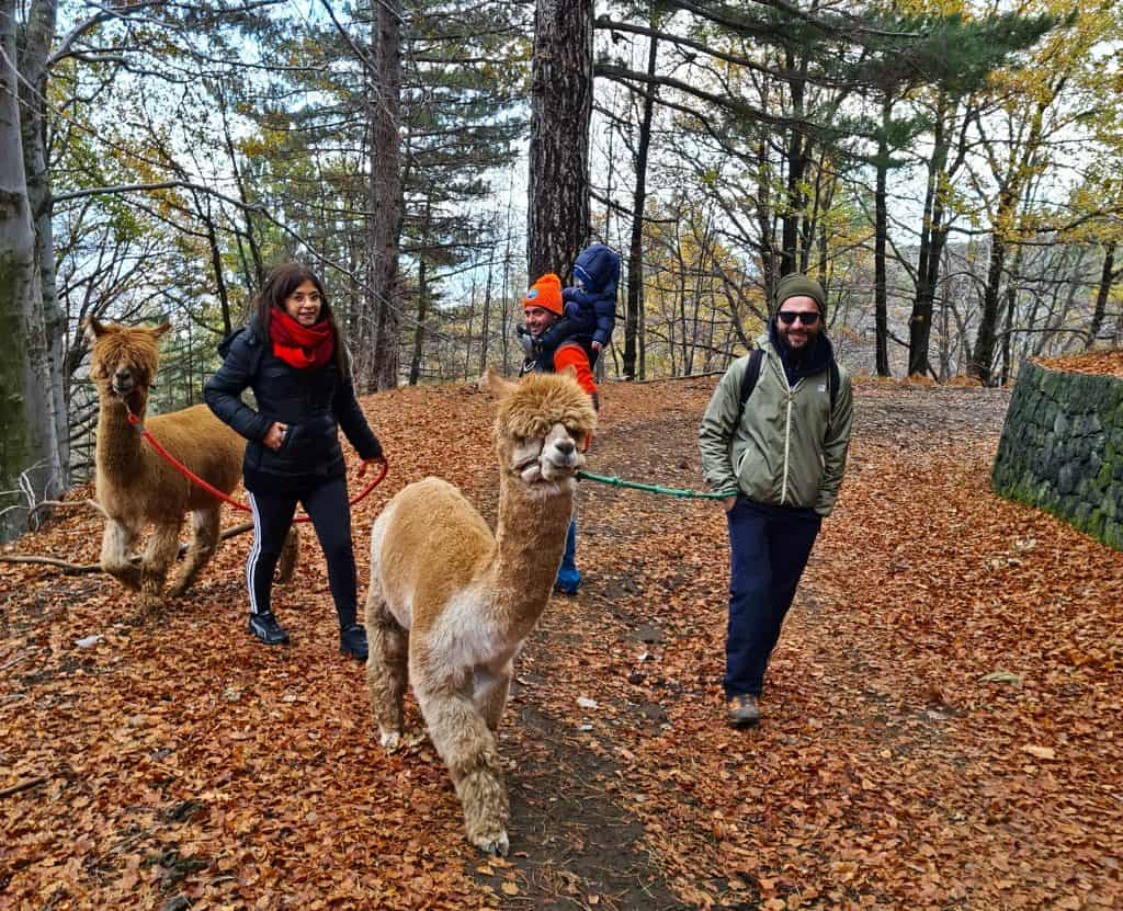 escursione con alpaca etna
