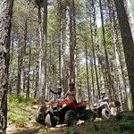 escursione in quad etna vulcano bosco