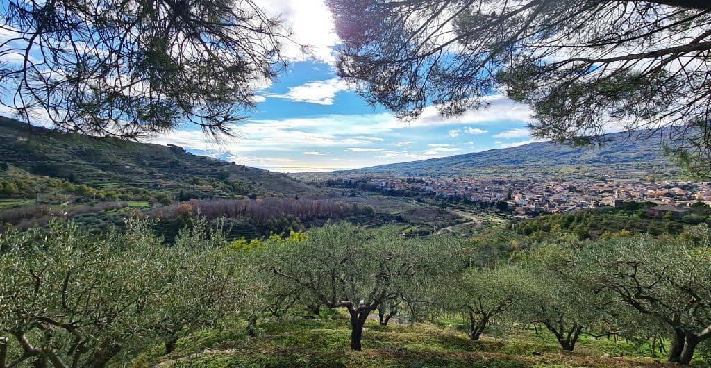 linguaglossa vista mare alberi olive