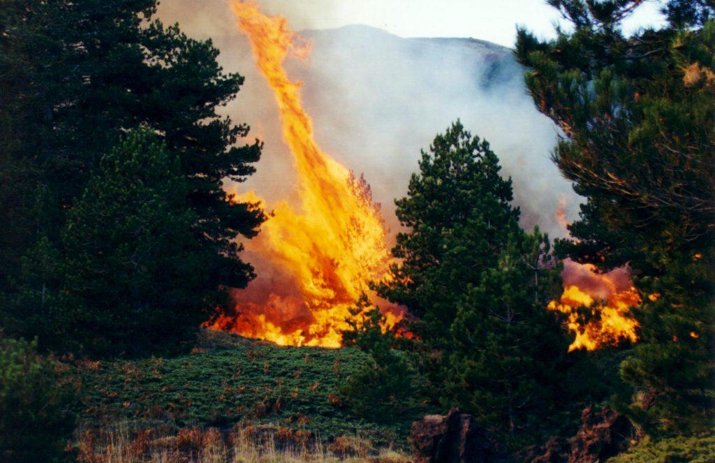 fuoco bosco eruzione etna 2002