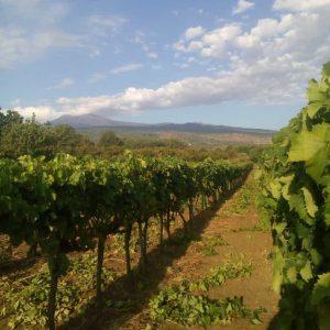 aitala vini dell etna