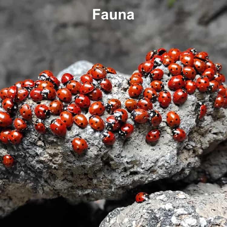 Fauna dell'Etna