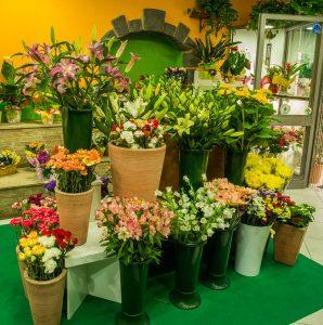 fiori ragonese linguaglossa