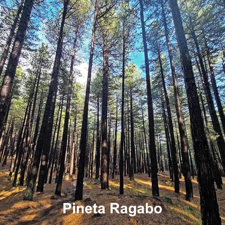 Pineta Ragabo Linguaglossa