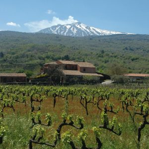 scilio wines valle galfina resort