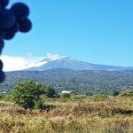 Uve vista Etna - vendemmia