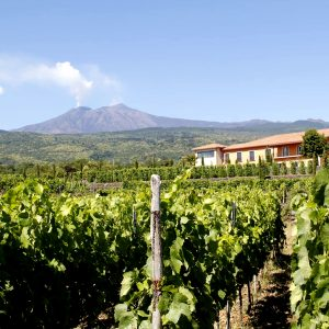 vivera etna winery